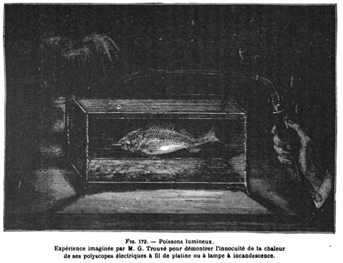 From the MLab's Trouvé repo, an image of an illuminated fish experiment