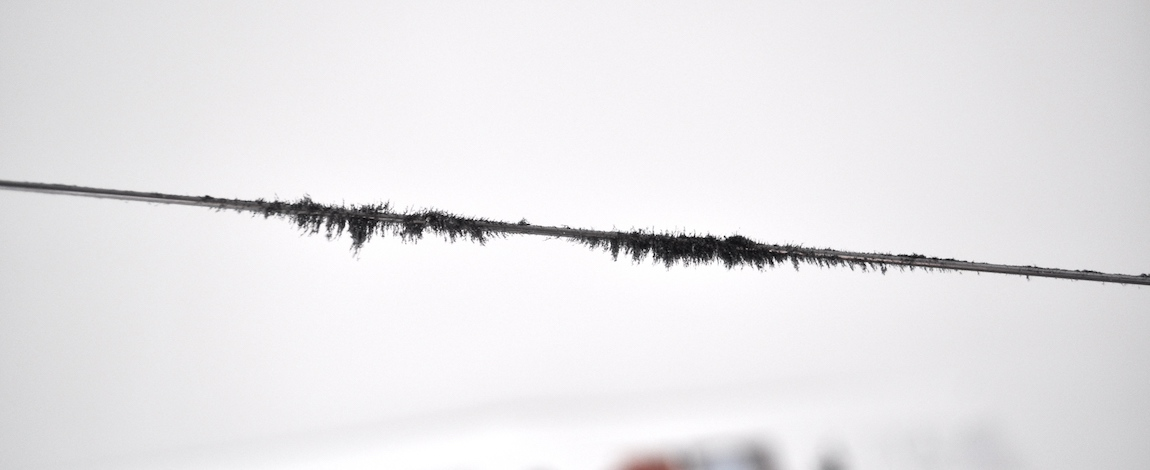 Iron filings reveal impressions of sound on piano wire (image by Danielle Morgan)